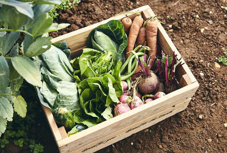 5 reasons to order an organic veg box
