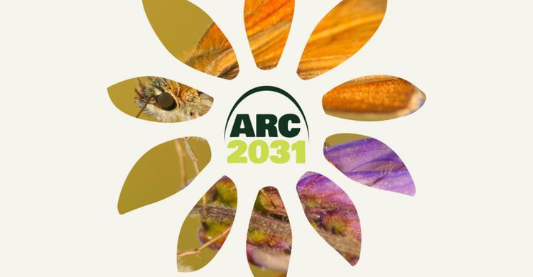 ARC 2031 Exhibition Studio