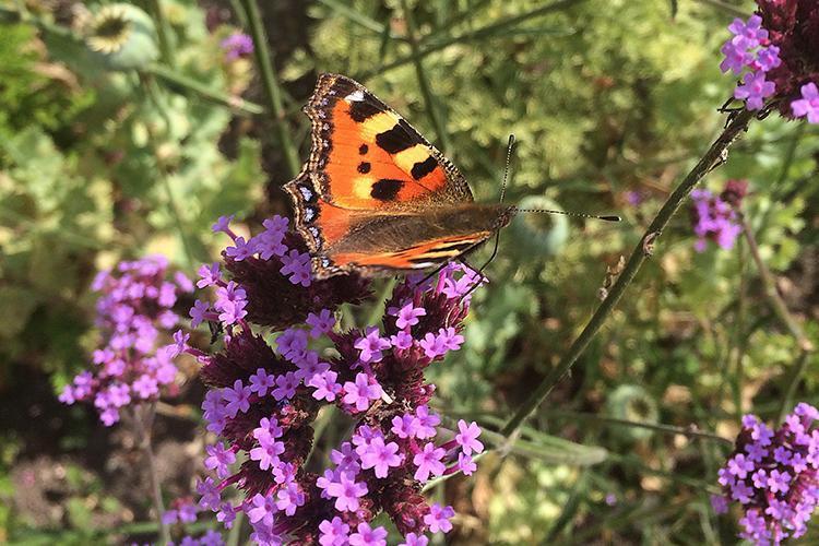 5 ways to encourage wildlife into your organic garden